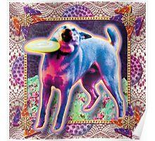 meme doggo with frisbee Poster