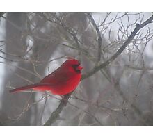 Cardinal Calm in Chaotic Conditions Photographic Print