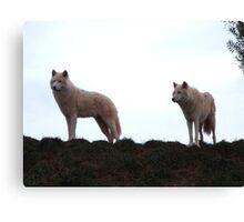 Wolves!! Canvas Print