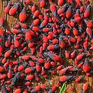 Red bugs! by jozi1