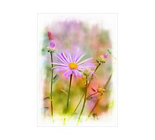 Magic Flowers  Photographic Print