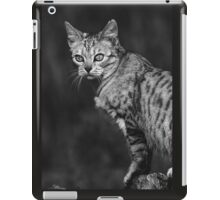"Chat - Cat "" Peluche "" 05 (c)(h) ) by Olao-Olavia / Okaio Créations 300mm f.2.8 canon eos 5 1989 iPad Case/Skin"