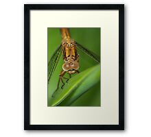 I can see you, a thousand ways !... Framed Print