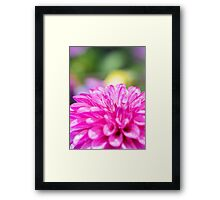 Dahlia Flower Colourful Macro Framed Print