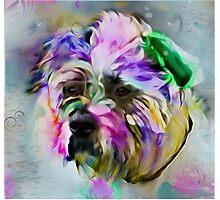 Pastel Pup - Shih Tzu Photographic Print