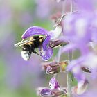 Bumblebee on Flower by Macrophy