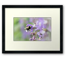 Bumblebee on Flower Framed Print