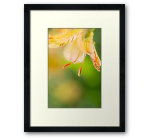 Vibrant Summer Flower Framed Print