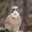 Jay 2 by Ellesscee