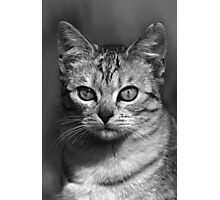 """Chat - Cat """" Peluche """" 04 (c)(h) ) by Olao-Olavia / Okaio Créations 300mm f.2.8 canon eos 5 1989    Photographic Print"""