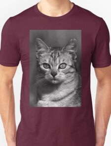 """Chat - Cat """" Peluche """" 04 (c)(h) ) by Olao-Olavia / Okaio Créations 300mm f.2.8 canon eos 5 1989    T-Shirt"""