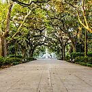 Benches in Forsyth Park by dbvirago