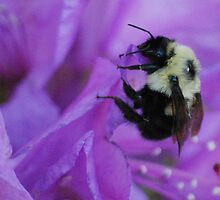 Bumble Bee on Rhododendron by Diane Blastorah