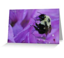 Bumble Bee on Rhododendron Greeting Card