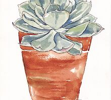 Echeveria imbricata in terracotta pot by Maree Clarkson