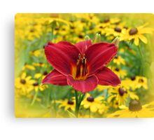 Scarlet Gold - Daylily with Rudbeckia Canvas Print