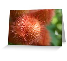 Rambutan - 2011 Greeting Card