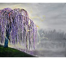 Magic Willow Photographic Print