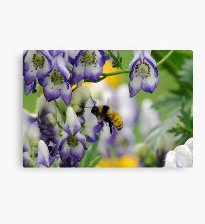 Bumble Bee in the Monk's Hood Canvas Print