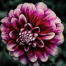 Faded Bloom by Steve Walser
