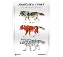 Anatomy of a Wolf Poster