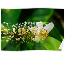 Digitally manipulated Orange blossom on a tree in a garden  Poster