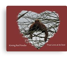 Kissing Red Pandas Canvas Print