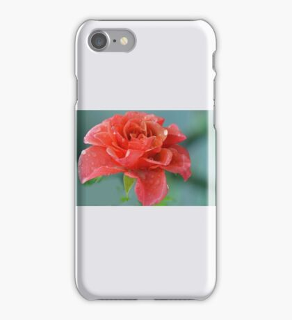 Rain Filled Rose......Lyme Dorset UK iPhone Case/Skin