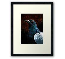 Humble Pigeon Framed Print