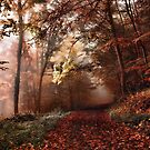 Autumn Walk by Helmar Designs