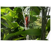 Red Ginger Flower, Framed in Lush Jungle Green Poster