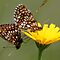 **** WINGED INSECTS GROUP **** TWO PER DAY PHOTOGRAPHY ONLY