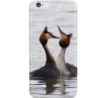 Great Crested Grebe - Courtship Dance 2 iPhone Case/Skin