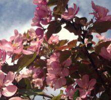 Crabapple Tree Blossoms Sticker