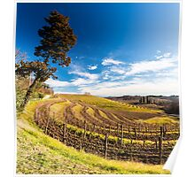 Vineyard in late winter Poster