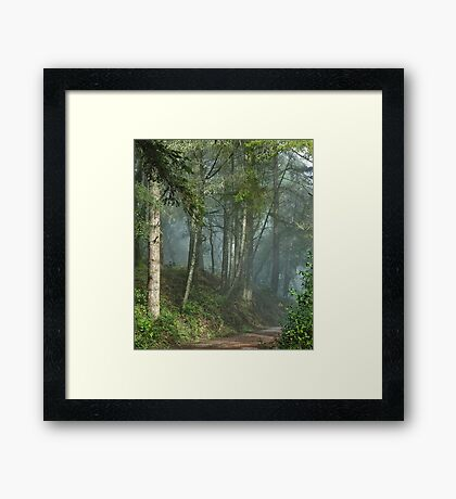 Cowell trail in the fog Framed Print