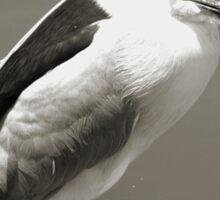 Black-Crowned Night Heron Sticker