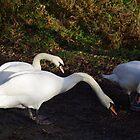 The Hungry Swans  by Deb Vincent
