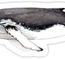 Humpback whale Sticker