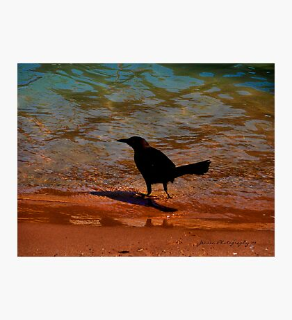 Wow Now This Is Paradise Photographic Print