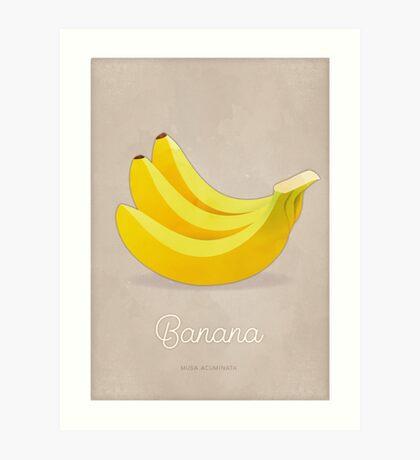 Banana (taupe) - Natural History Fruits Art Print