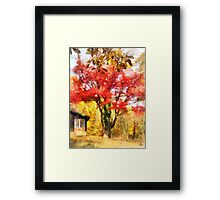 Red Autumn Sycamore Framed Print