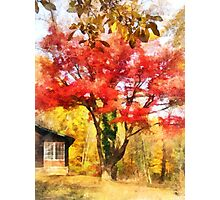 Red Autumn Sycamore Photographic Print