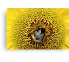 Bumble Bee Yellow Canvas Print