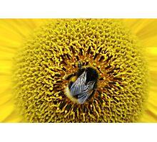 Bumble Bee Yellow Photographic Print