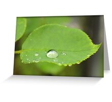 Rain Drop on Leaf Greeting Card