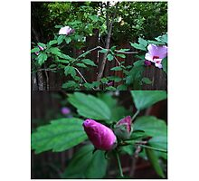 Floral Diptych Photographic Print