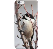 Chickadee chooses a berry iPhone Case/Skin