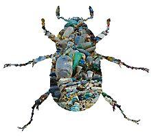 Trash Beetle (White) Photographic Print