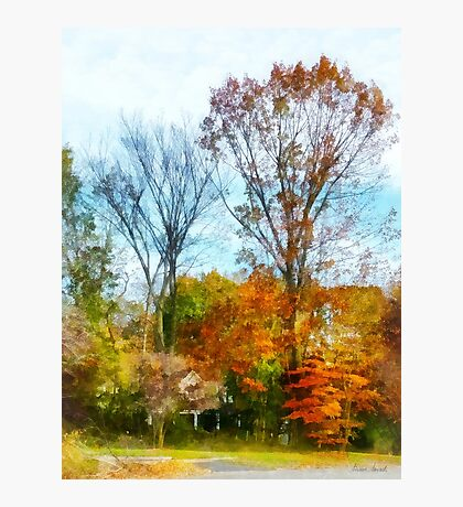 Tall Autumn Trees Photographic Print